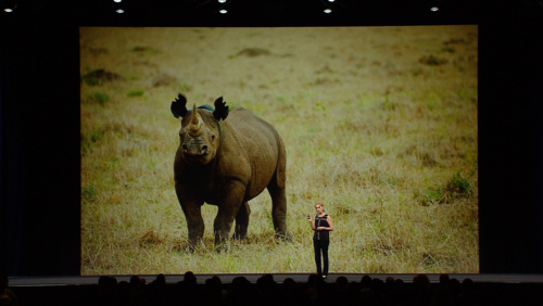 Tapping into Innovative Solutions to Save the World's Wildlife